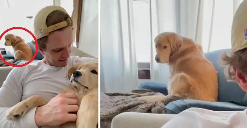 Ζηλιάρα σκυλίτσα δεν μπορεί να βλέπει τον ιδιοκτήτη της να αγκαλιάζει άλλη