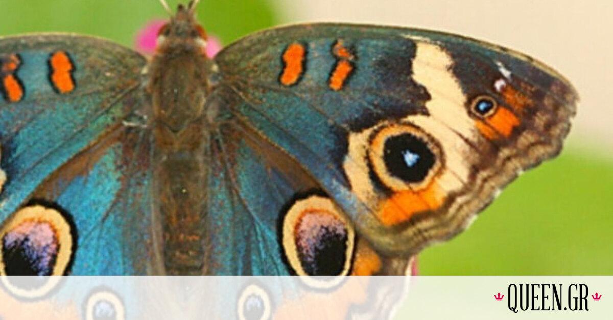 Η εμμονή μας με το σχέδιο-πεταλούδα που μεσουρανούσε τη δεκαετία του '90 έχει ένα βαθύτερο νόημα