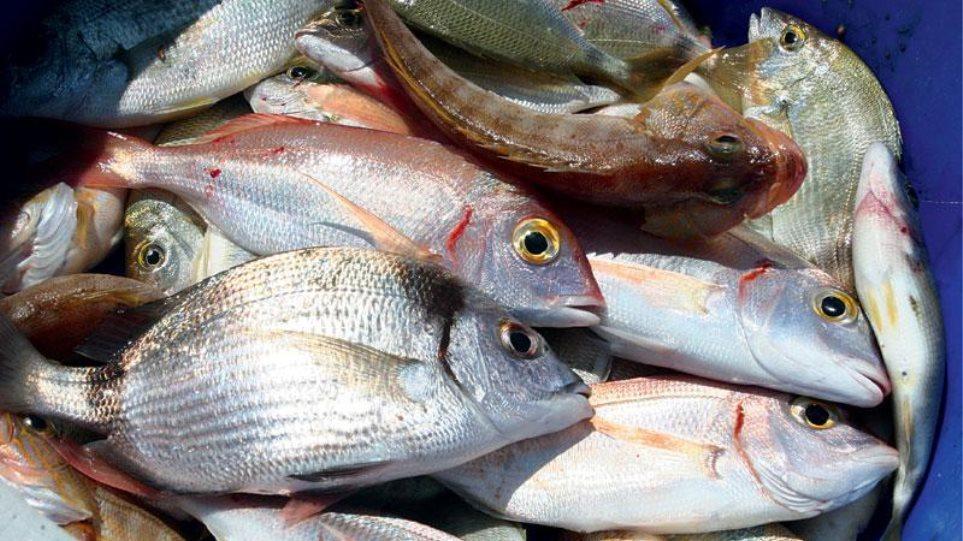 Ιωάννινα: Διέρρηξε δυο φορές το ίδιο μαγαζί και έκλεψε… ψάρια!