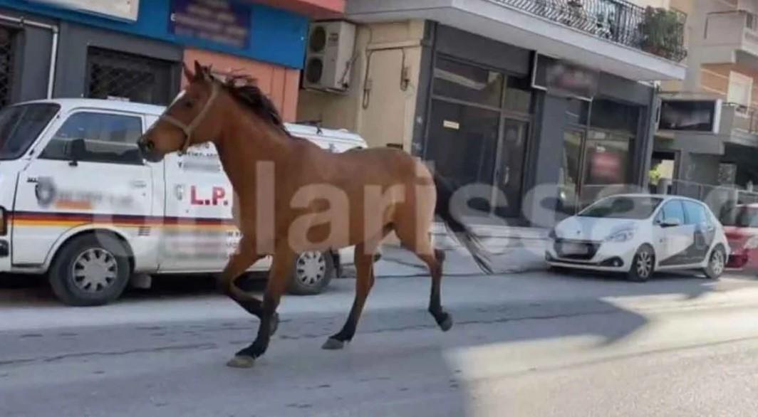 Άλογο έσπασε το lockdown και έκανε βόλτες χαζεύοντας βιτρίνες στη Λάρισα