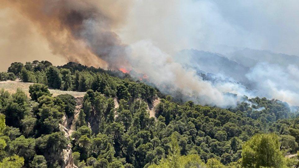 Meteo: Στάχτη 55.000 στρέμματα στο Σχίνο- Οι συνθήκες που δημιούργησαν «ακραία φαινόμενα»