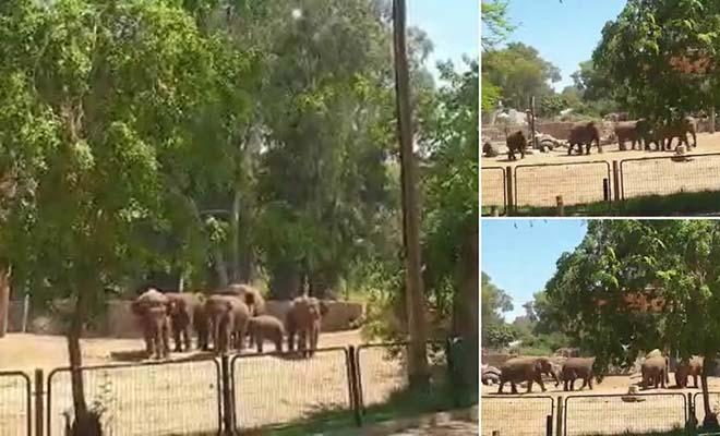 Ισραήλ: Κοπάδι ελεφάντων αγκαλιάζονται για να προστατεύσουν το μικρό τους από τις βόμβες της Χαμάς [Βίντεο]