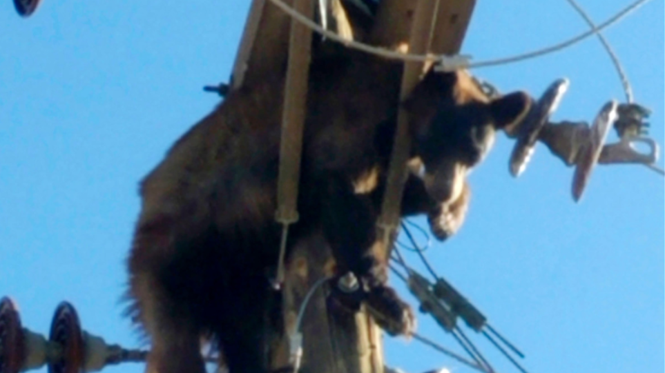 Δείτε βίντεο: Αρκούδα σκαρφάλωσε σε κολώνα παροχής ρεύματος για να ξεκουραστεί προκαλώντας black out 15 λεπτών