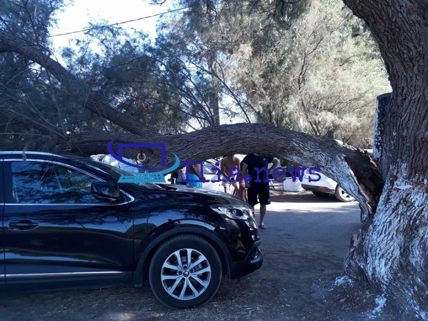 Ηλεία: Δέντρο καταπλάκωσε ΙΧ αυτοκίνητο στην παραλία των Σαβαλίων – Δείτε βίντεο