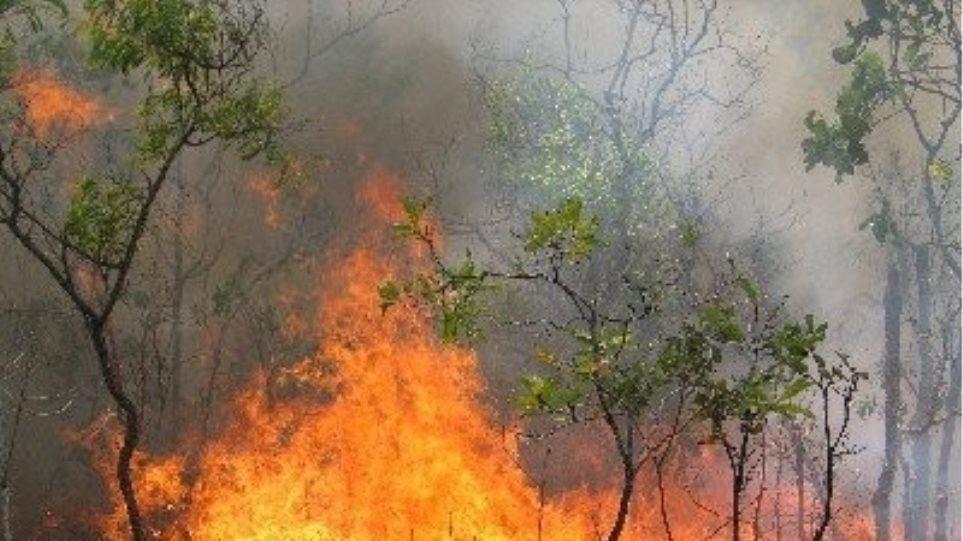 Στις 54 οι νέες πυρκαγιές το τελευταίο 24ωρο