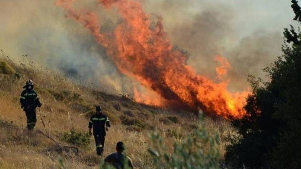 Φωτιά σε δασική έκταση στην Περιφερειακή Αιγάλεω – Μεγάλη η κινητοποίηση της πυροσβεστικής