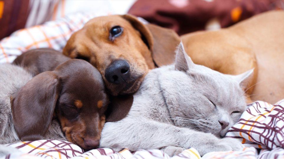 «Πέρασε» το νομοσχέδιο για τα ζώα συντροφιάς